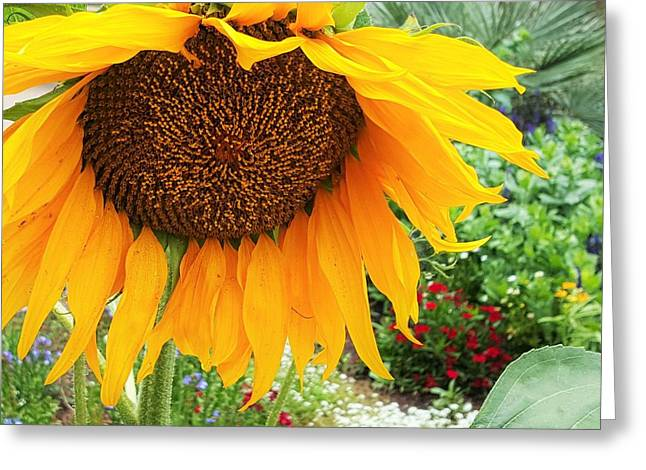 Bloosom Greeting Cards - Big Sunflower Greeting Card by Jasna Gopic
