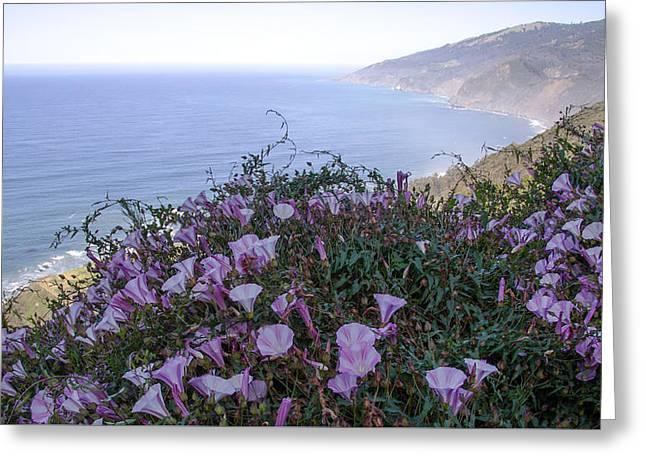 Hibiscus Coast Greeting Cards - Big Sur Flowers Greeting Card by Joel Metcalfe