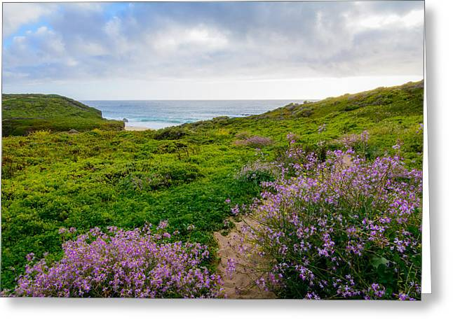 Big Sur Greeting Cards - Big Sur in Spring Greeting Card by Cristi Canepa