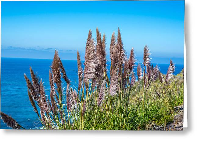 Pampas Grass Greeting Cards - Big Sur Pampas Grass Greeting Card by Joseph S Giacalone