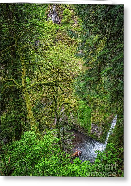 Bigfoot Country Greeting Card by Jon Burch Photography