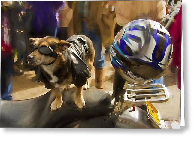 Owner Greeting Cards - Biker Dog Greeting Card by Robert Murray