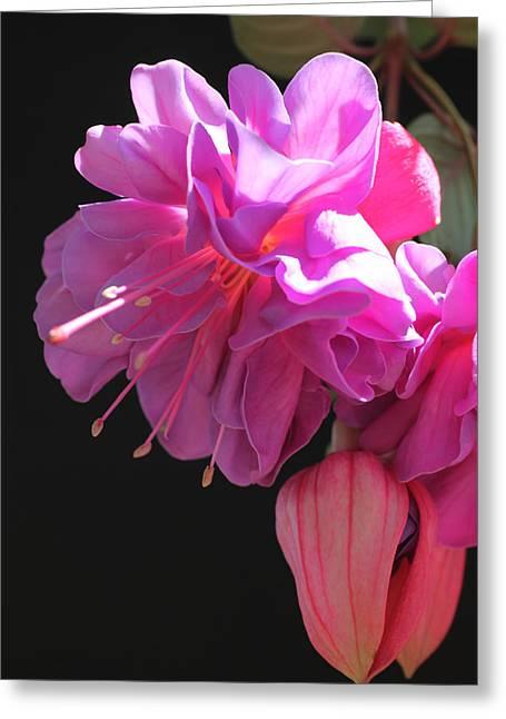 Fushia Greeting Cards - Billowy Pink Fushia Greeting Card by Tammy Pool