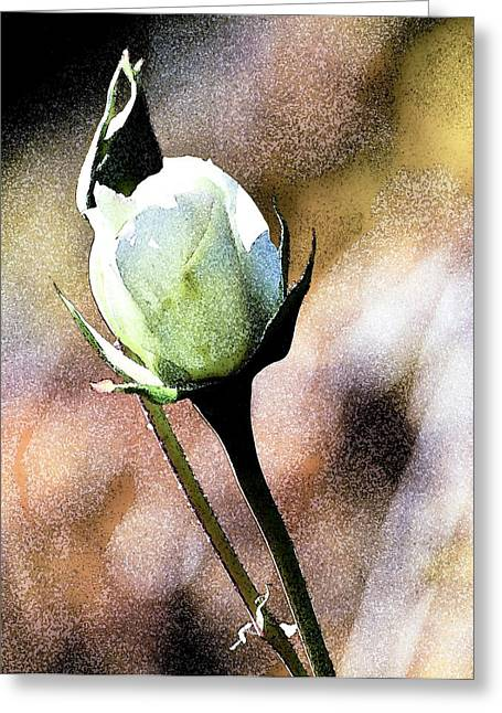 Floral Photos Greeting Cards - Bills Bud Greeting Card by Norman  Andrus