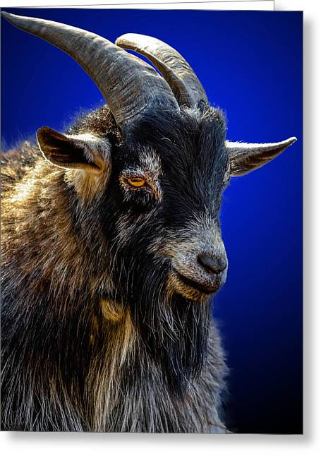 Scapegoat Greeting Cards - Billy Goat Blues Greeting Card by Brian Stevens