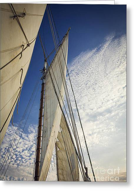 Schooner Greeting Cards - Biloxi Schooner Sailing Greeting Card by Joan McCool
