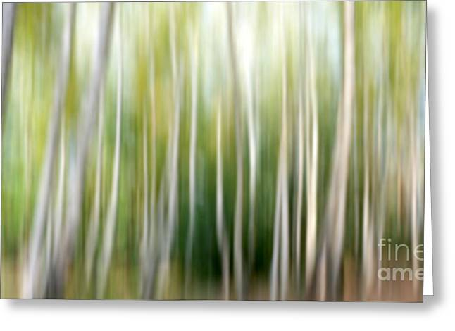 Birch Abstract Greeting Card by SK Pfphotography