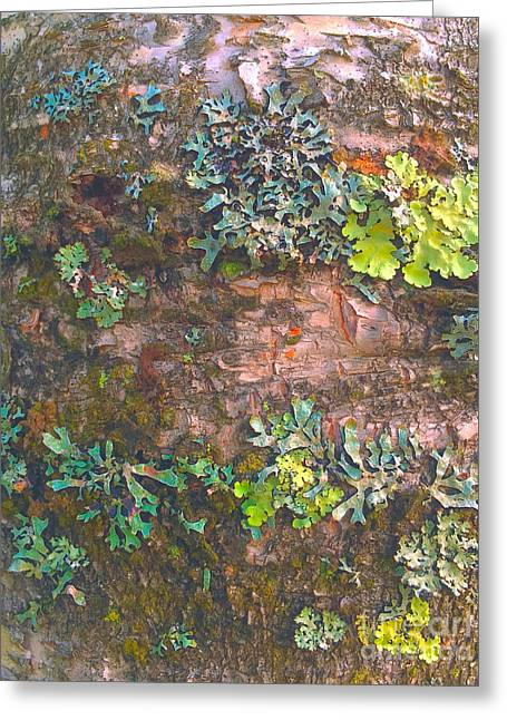 Photos Of Lichen Greeting Cards - Birch Bark and Lichen Greeting Card by Todd Breitling