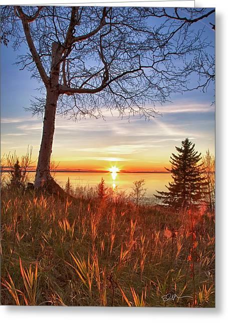 Birch Blaze Greeting Card by Ed Boudreau