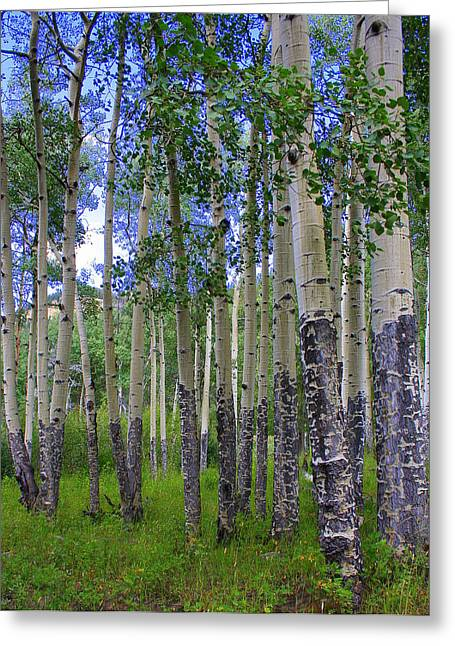 On Paper Photographs Greeting Cards - Birch Forest Greeting Card by Julie Lueders