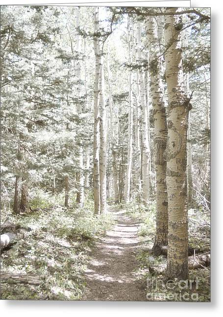 Sandia Mountains Greeting Cards - Birch Path Woodland Greeting Card by Andrea Hazel Ihlefeld