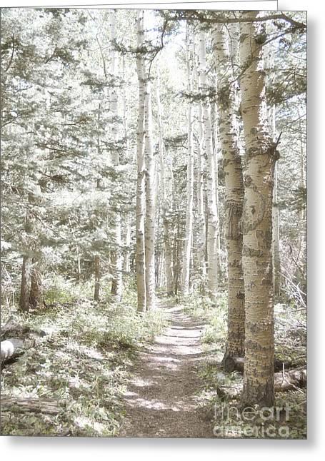 Birch Tree Greeting Cards - Birch Path Woodland Greeting Card by Andrea Hazel Ihlefeld