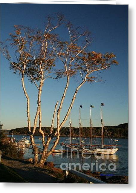 Birch Tree By The Harbor Greeting Card by Linda Jackson