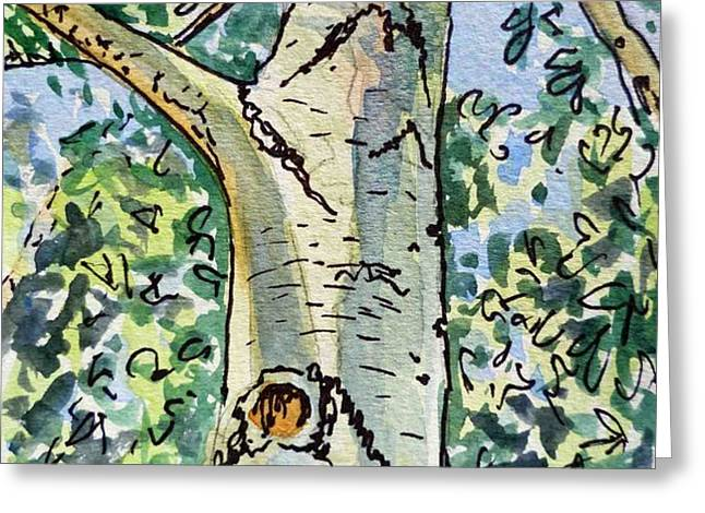 Birch Tree Sketchbook Project Down My Street Greeting Card by Irina Sztukowski