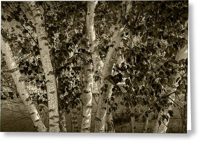 Brown Toned Art Greeting Cards - Birch Trees in Sepia Tone by the shore of Crystal Lake Greeting Card by Randall Nyhof