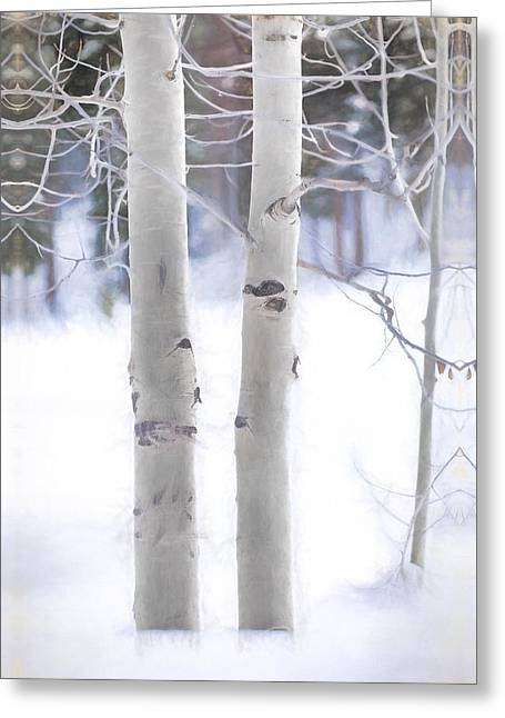 Winter Storm Greeting Cards - Birch Trees in the Rocky Mountain Forest Greeting Card by Terri Bahun