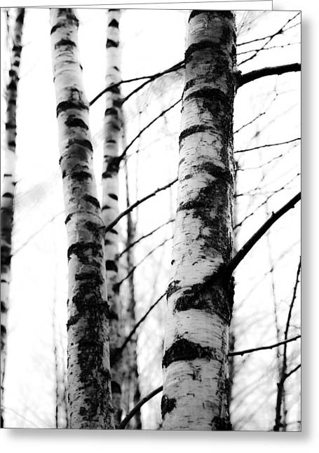 Lush Green Mixed Media Greeting Cards - Birch trees Greeting Card by Toppart Sweden