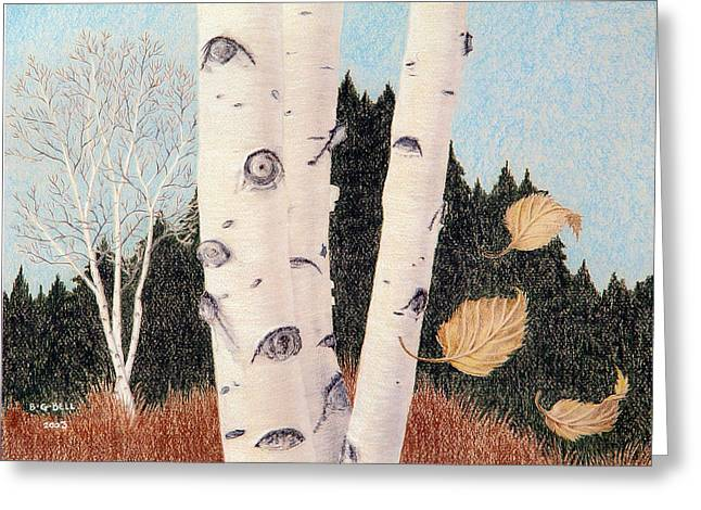 Maine Landscape Drawings Greeting Cards - Birches Greeting Card by Betsy Gray Bell