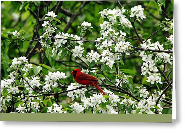Wild Orchards Greeting Cards - Bird And Blossoms Greeting Card by Debbie Oppermann