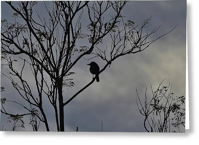 Bird On Tree Greeting Cards - Bird and Tree Silhouette I Greeting Card by Linda Brody