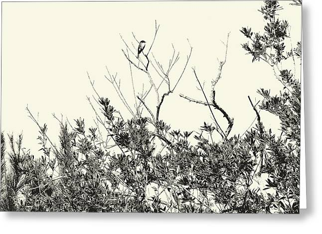 Enhanced Greeting Cards - Bird in a Holly Tree Greeting Card by John Trommer