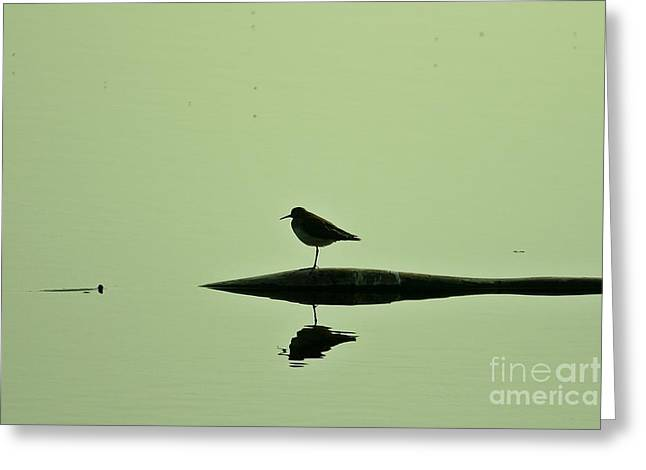 Bird In A Pond Greeting Card by Mario Brenes Simon