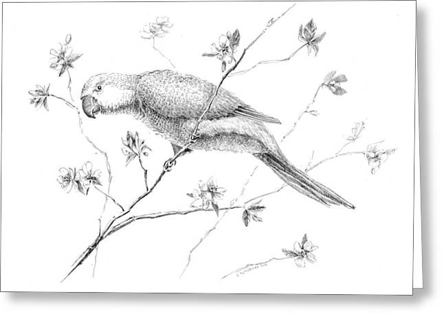Bird In Flowering Tree Greeting Card by Crazy Cat Lady