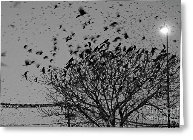 Bird In Tree Greeting Cards - Bird Invasion Greeting Card by Joy Tudor