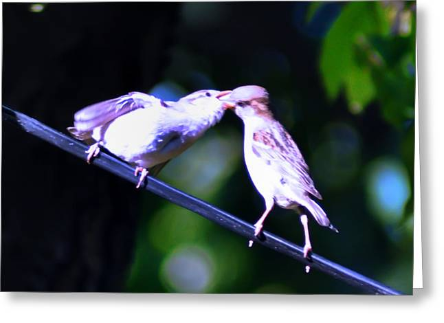 Bird Photographs Greeting Cards - Bird Kiss Greeting Card by Bill Cannon