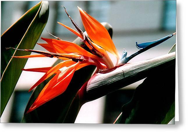 Botanical Greeting Cards - Bird of Paradise 2 Greeting Card by Susanne Van Hulst
