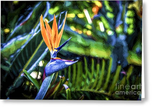 Pinks And Purple Petals Photographs Greeting Cards - Bird of Paradise Greeting Card by Rich Governali