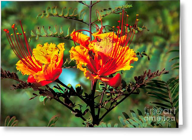 Yellow Stamen Greeting Cards - Bird Of Paradise Greeting Card by Robert Bales