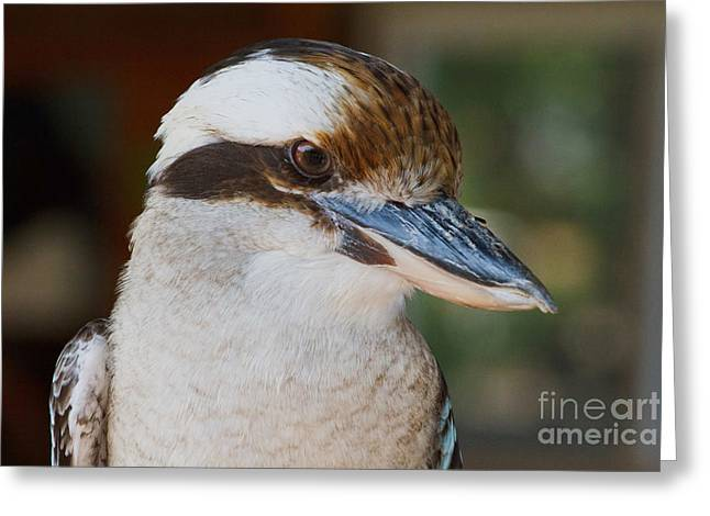 Bird Of Prey Greeting Card by A New Focus Photography