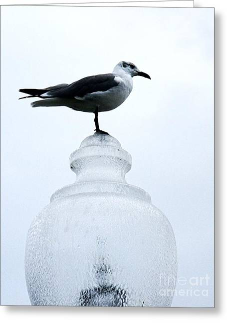Overcast Day Greeting Cards - Bird on a Lamp  Greeting Card by JW Hanley