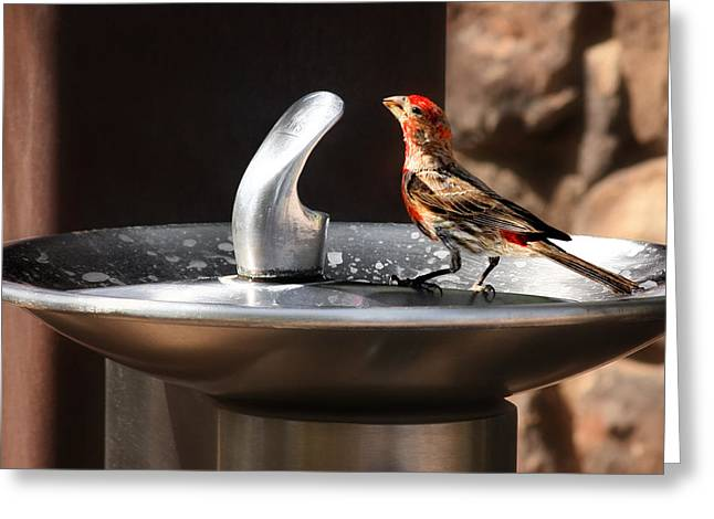 Drinking Greeting Cards - Bird Spa Greeting Card by Christine Till