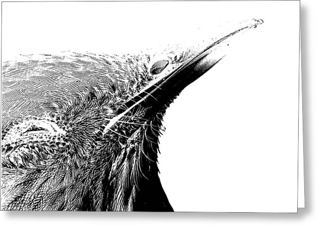 T Shirts Greeting Cards - Bird Transparent Background Greeting Card by Edward Fielding
