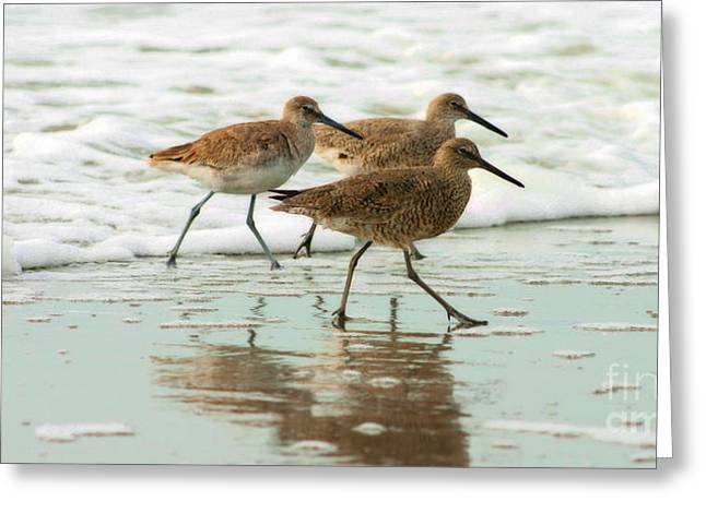 Trio Plover Series Greeting Card by Angela Rath