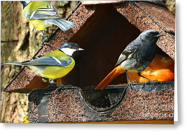 Weeping Greeting Cards - Birdhouse full of birds Greeting Card by Gregory DUBUS