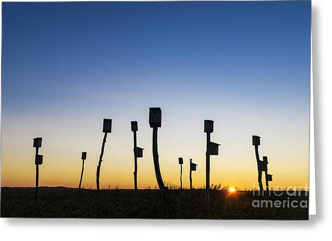 Birdhouse Sunrise Greeting Card by John Greim