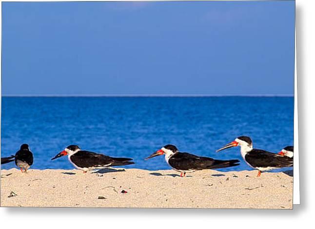 Seabirds Greeting Cards - Birdline Greeting Card by Gary Dean Mercer Clark