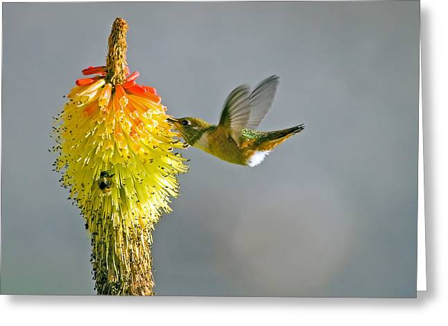 Birds and Bees Greeting Card by Mike  Dawson