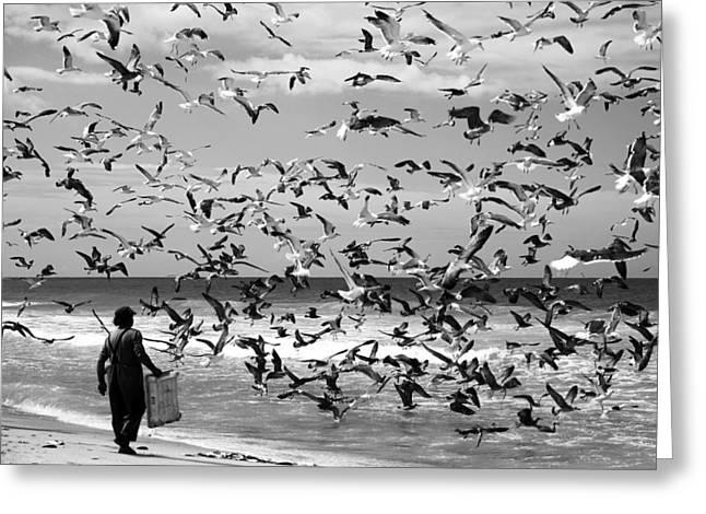 Birding Photographs Greeting Cards - Birds Birds Greeting Card by Liesbeth Van Der Werf
