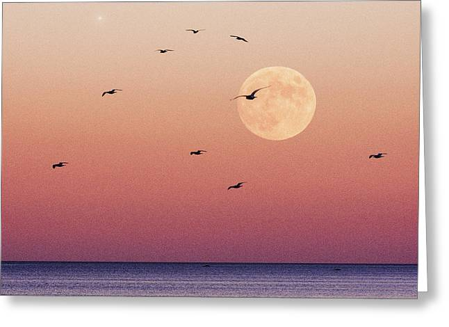 Sea Moon Full Moon Greeting Cards - Birds Eye Greeting Card by Erik Comstock