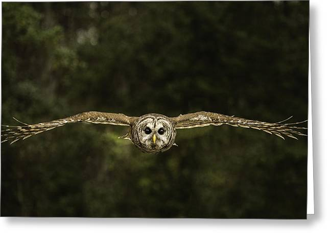 Hunting Bird Greeting Cards - Birds Eye View Greeting Card by Christy Cox