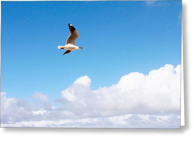 Flying Seagull Pyrography Greeting Cards - Birds Eye View of Surfers Paradise Greeting Card by Susan Vineyard