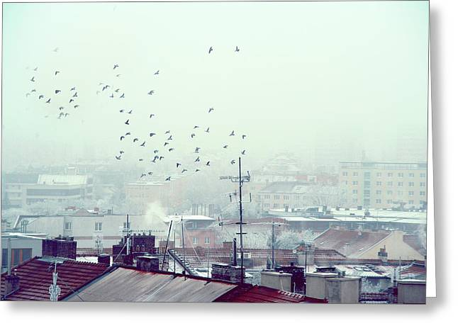 Birds Falling Down The Rooftops Greeting Card by Jenny Rainbow
