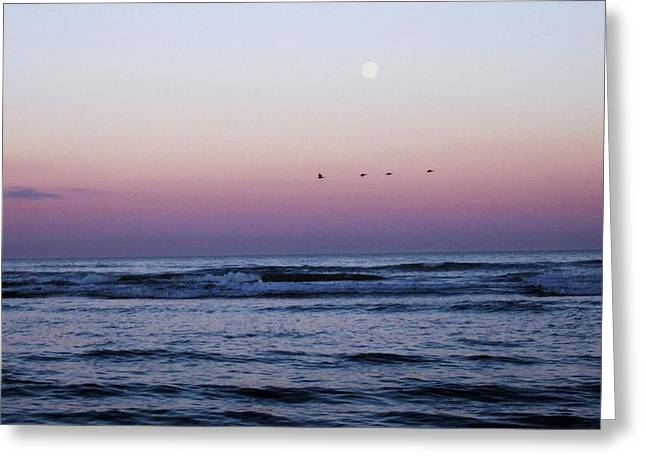 Maine Beach Greeting Cards - Birds flyin high you know how I feel. Greeting Card by Kathy Anderson