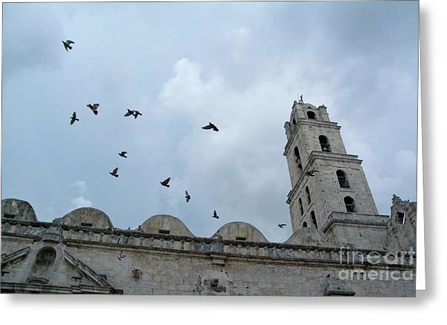 Birds flying above the basilica and the monastery of Saint Francis of Assisi Greeting Card by Sami Sarkis