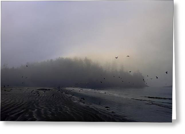 Beauty Greeting Cards - Birds Flying Over Foggy Beach Greeting Card by Gillham Studios