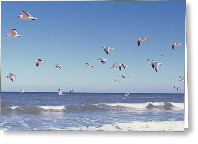 Birds Flying Over The Sea, Flagler Greeting Card by Panoramic Images
